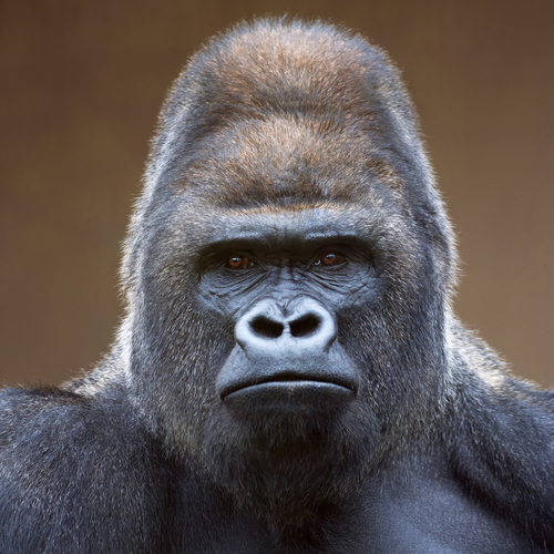 Cybersecurity: The 801 Pound Gorilla in the Room